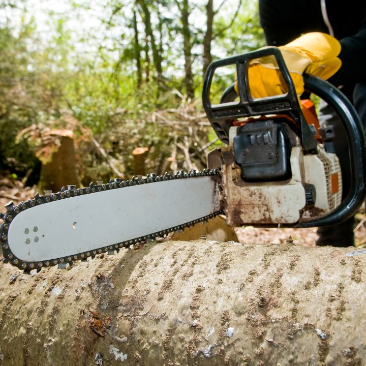 Cropped shot of logger slicing tree with chainsaw